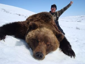 Magadan region, guided brown bear hunts with Kulu Safaris