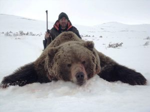 big game brown bear trophy magadan region