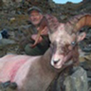 Bruce Keller snow sheep hunting in Magadan, Russia