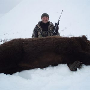Giant brown bear hunting with Kulu Safaris
